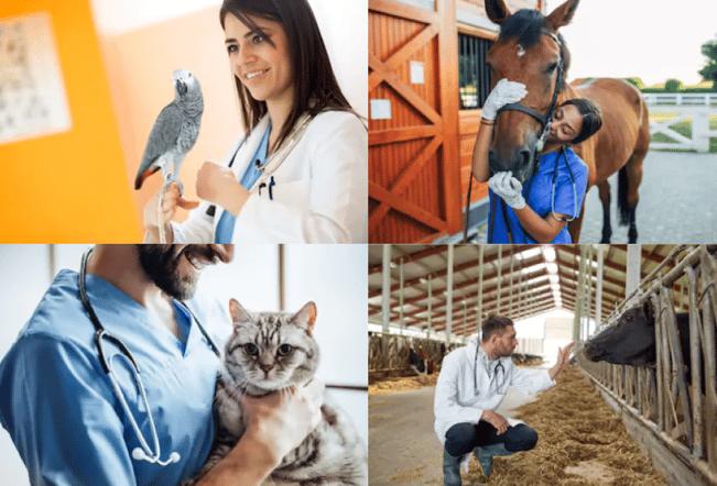 i-Cruit Animal Care houdt enquete en vraagt dierenartsen te reageren