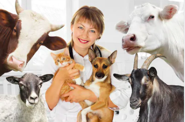 i-Cruit Animal Care Veterinair Recruitment