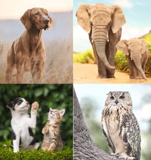 Sales dieren olifant hond kat en uil